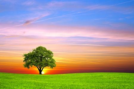 Photo pour Tree on the field - image libre de droit
