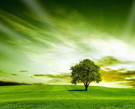 Photo for Green landscape - Royalty Free Image