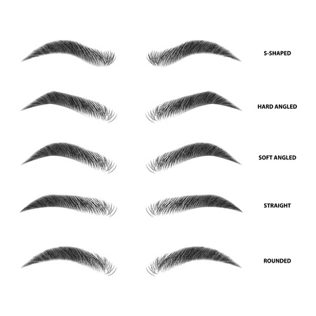 Illustration for Types of eyebrows vector illustration - Royalty Free Image