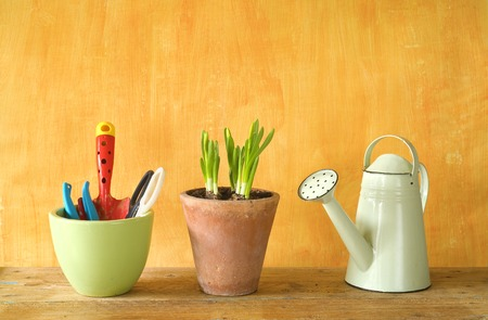 flower seedlings and gardening utensils, springtime, free copy space