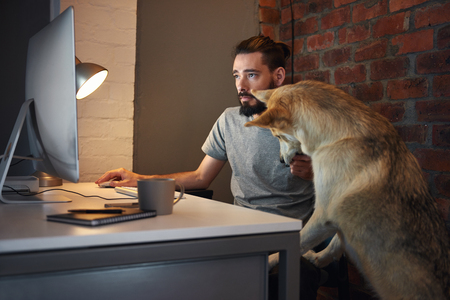 Photo for Curious husky dog pet  seeking owner's attention at his desk as he concentrates on working at his computer - Royalty Free Image