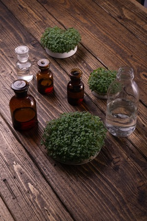 Foto de Microgreens in round container and small glass vials on wooden table. Sprouts, microgreens, healthy eating concept. Science, biology. - Imagen libre de derechos