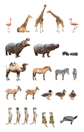 Collection of the zoo animals isolated on the white background
