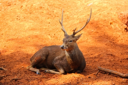 Photo for Deer - Royalty Free Image