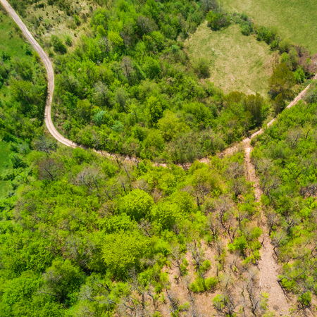Foto de Green forest and road, top view - Imagen libre de derechos