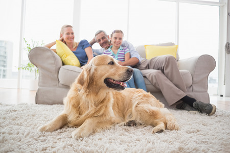 Foto per Golden Retriever on rug with family in background at home - Immagine Royalty Free