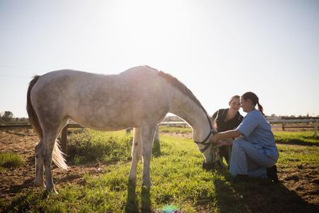 Foto de Woman and vet tending to horse in field on sunny day - Imagen libre de derechos