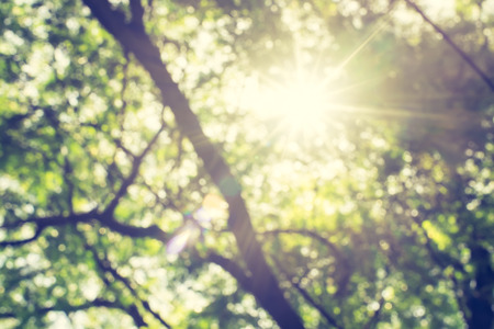 Foto per Blur background : Looking up at green tree with sun burst. - Immagine Royalty Free