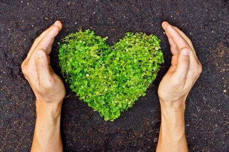 Foto de hands holding green heart shaped tree   tree arranged in a heart shape   love nature   save the world   heal the world   environmental preservation - Imagen libre de derechos