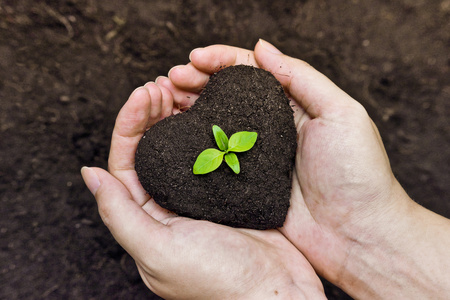 Foto de hands holding fertile soil as a heart shape with a young green tree in the middle   planting tree   growing a tree   love nature   heal the world - Imagen libre de derechos