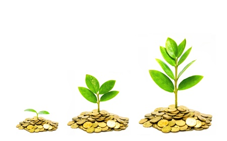 Photo for trees growing on piles of golden coins / business with csr practice - Royalty Free Image