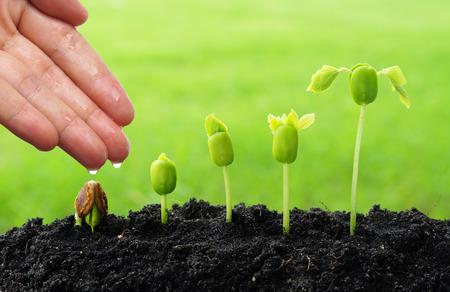Foto für hand watering young plants growing in germination sequence  green background - Lizenzfreies Bild