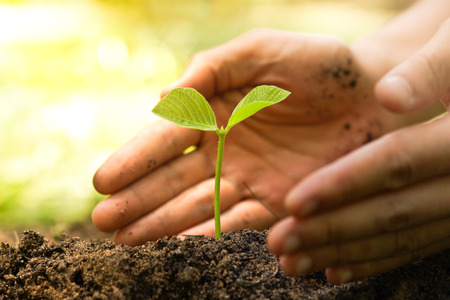 Photo pour Hands of farmer growing and nurturing tree growing on fertile soil with green and yellow bokeh background - image libre de droit