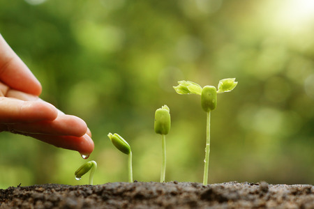 Foto de hand nurturing and watering young baby plants growing in germination sequence on fertile soil with natural green background - Imagen libre de derechos