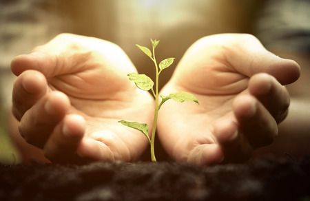 Photo for Growing a tree. Hands holding and nurturing a green plant growing on fertile soil with warm sunlight / Protect nature - Royalty Free Image