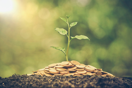 Photo for A tree growing from pile of coins / CSR and green business / business ethics - Royalty Free Image
