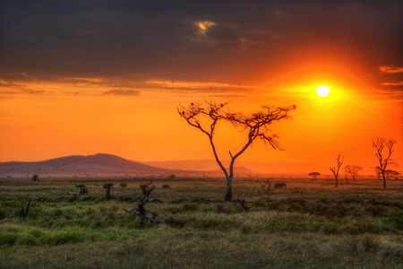 Photo pour Serengeti National Park Wildlife - image libre de droit