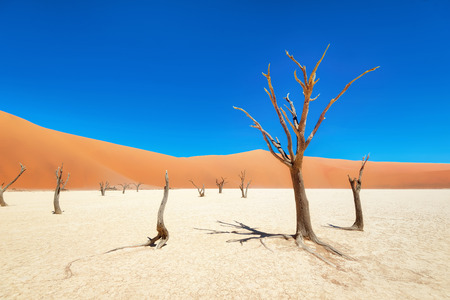 Photo for Dead Vlei in Naukluft National Park, Namibia, taken in January 2018 - Royalty Free Image