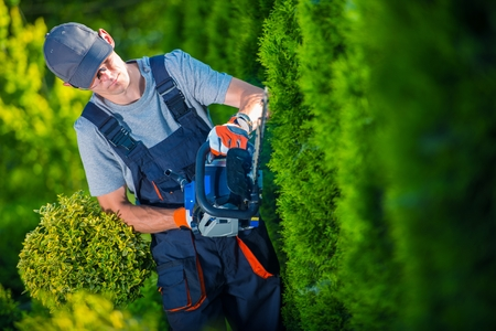 Foto de Hedge Trimmer Works. Gardener with Gasoline Hedge Trimmer Shaping Wall of Thujas. - Imagen libre de derechos