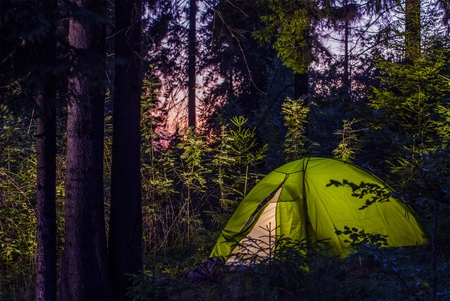 Camping in a Forest. Late Evening on a Camp Site. Green Illuminated Tent Between Spruce Trees. Outdoor Lifestyle.