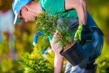 Foto de Planting New Trees. Gardener Buying New Plants For His Garden Project. - Imagen libre de derechos