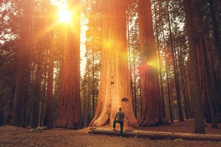 Foto de Caucasian Hiker in His 30s in Front of Giant Sequoia. Sierra Nevada Ancient Forest. - Imagen libre de derechos