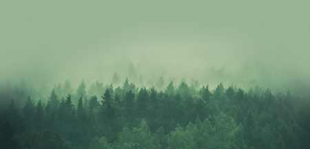 Photo for Foggy Forest Panorama. Scenic Forestry and Low Elevated Clouds. - Royalty Free Image