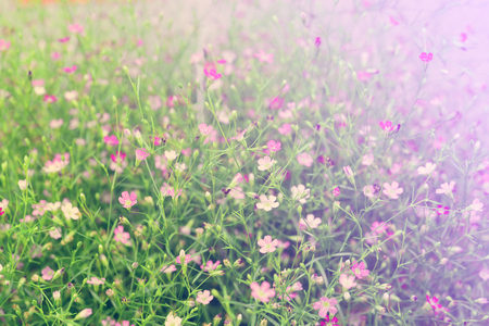 Foto für Beautiful Pink gypsophila flower vintage style . Closeup - Lizenzfreies Bild
