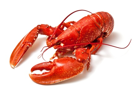 Cooked lobster on a white studio background