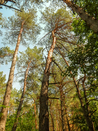 Photo for thick green forest with sunny bright rays through the eyelids - Royalty Free Image