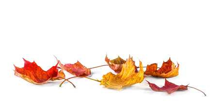 Photo pour Autum banner with colorful fall leaves falling down from tree. Isolated on white. - image libre de droit