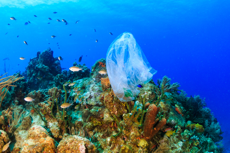 Photo pour Plastic pollution:- a discarded plastic rubbish bags floats on a tropical coral reef presenting a hazard to marine life - image libre de droit