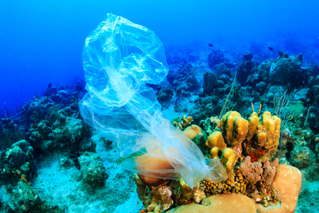 Foto de Plastic pollution:- a discarded plastic rubbish bag floats on a tropical coral reef presenting a hazard to marine life - Imagen libre de derechos