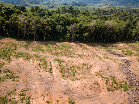 Photo for Aerial drone view of deforestation of a tropical rain forest to make way for palm oil and construction - Royalty Free Image