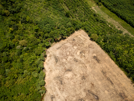Photo for Rainforest Deforestation - Drone view of tropical rainforest cleared for illegal logging and palm oil plantations - Royalty Free Image
