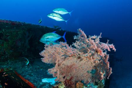 Foto de A coral encrusted underwater shipwreck in the Similan Islands - Imagen libre de derechos