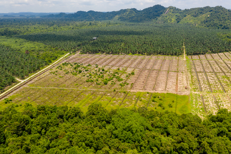 Photo for Aerial drone view of large scale deforestation in the rainforest of Borneo to make way for palm oil plantations - Royalty Free Image