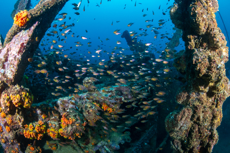 Foto de Schools of colorful tropical fish swarming around an old, broken underwater shipwreck - Imagen libre de derechos