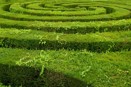 swirls to the center of a complicated hedge maze