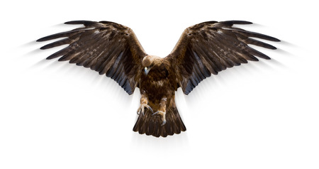 eagle with spread wings, motion blur, isolated