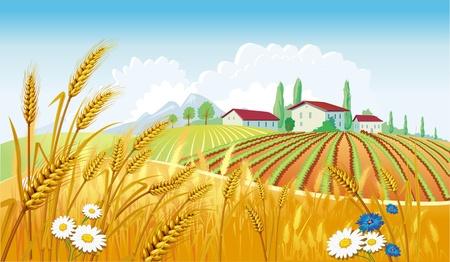 Illustration pour Rural landscape with fields - image libre de droit