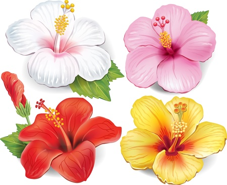 Illustration pour Set of Hibiscus - image libre de droit