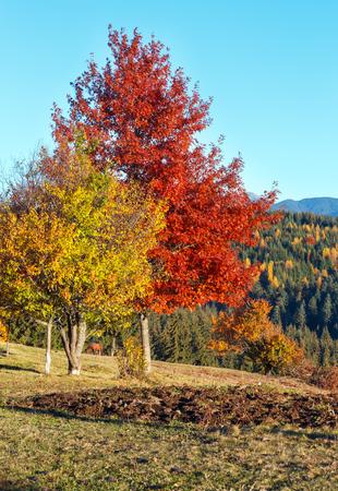 Photo for Morning Carpathian autumn mountains landscape with forest on slopes (Yablunytsia pass, Ivano-Frankivsk oblast, Ukraine). - Royalty Free Image