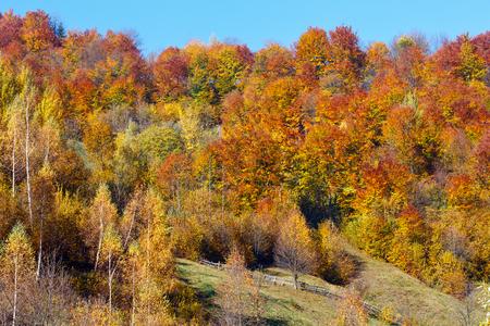 Photo for Autumn Carpathian Mountains landscape with multicolored trees on slope (Rakhiv district, Transcarpathia, Ukraine). - Royalty Free Image
