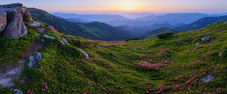Photo pour Carpathian morning summer panorama view with rhododendron flowers, Chornohora, Ukraine. - image libre de droit