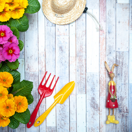 Photo pour Concept Spring planting , harmony and beauty. Flowers Primula pink and yellow and garden tools , flat lay, space for text - image libre de droit