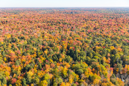 Photo for Wood and trees in autumn, aerial view, Canada. Helicopter view of an endless woodland with beautiful colors during fall season in Ontario. Travel and nature concept - Royalty Free Image