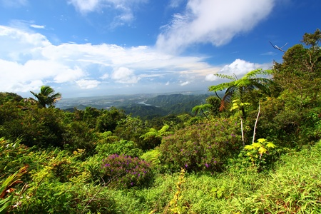 Beautiful view of the lush tropical forests of Puerto Rico