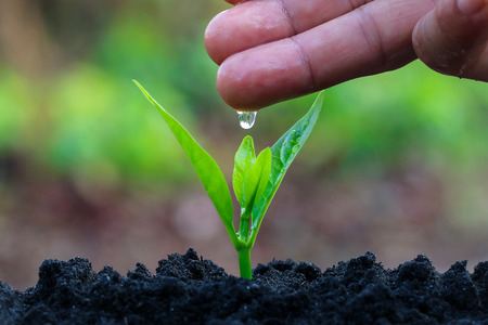 Foto de During the tree planting with seedlings and watering. Keep trees healthy When added, would help reduce global warming. - Imagen libre de derechos