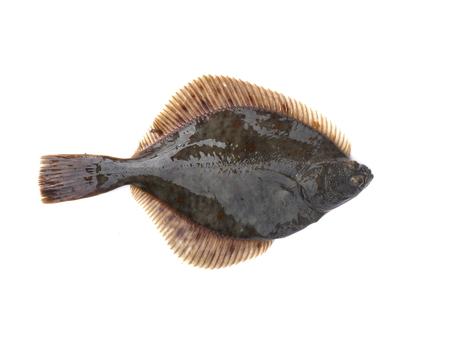 Foto de flounder on a white background - Imagen libre de derechos